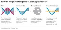 How the drug slows the spread of Huntingtons